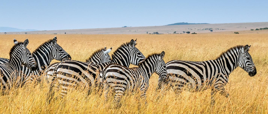The Best Virtual Safaris To Do From Your Living Room